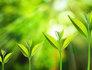 2017 high-growth year plant